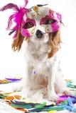 Śmieszny pies w karnawał masce Partyjny pies w studiu Nonszalancki królewiątka Charles spaniela pies z kolorową piórko purpur mas Obrazy Royalty Free