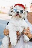 Śmieszny pies z szkłami Obrazy Stock