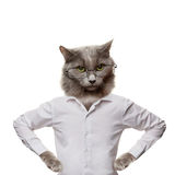 Śmieszny puszysty kot w szkłach. kolaż na bielu Obrazy Royalty Free