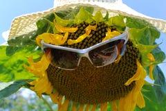 śmieszny słonecznik Obraz Royalty Free