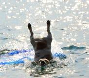 Śmieszny skok od dźwigarki Russel zdjęcia royalty free