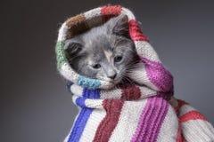Śmieszny smutny młody marznięcie kot zawijający w szaliku fotografia stock