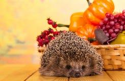 Śmieszny szary jeż siedzi na stole, obok kosza warzywa i owoc Zdjęcie Stock