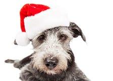 Śmieszny Terrier Santa pies Z śniegiem Obrazy Royalty Free