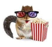 Śmieszny zwierzęcy chipmunk dopatrywania film z popkornem obraz stock