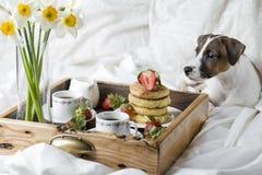 Śniadanie w łóżku: chałupa sera bliny, kawa i truskawki, zdjęcia stock