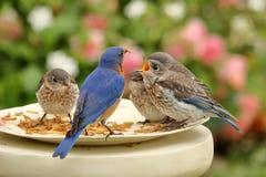 Śniadanie w ogródzie różanym Zdjęcia Stock