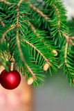 Śniadanio-lunch Jedlinowy drzewo z potomstwami konusuje w wazie Obraz Royalty Free