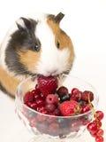 śniadaniowy królik doświadczalny s obrazy stock