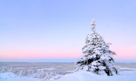 Śnieżka obrazy stock
