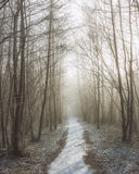 Śnieżna ścieżka między drzewami Zdjęcia Royalty Free