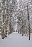 Śnieżna ścieżka przez lasu obraz royalty free