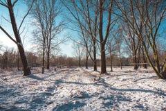 Śnieżna ścieżka Przez Nagich drzew na Pogodnym zima dniu Zdjęcie Stock