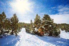 Śnieżna ścieżka w śnieżnym halnym lesie obraz stock