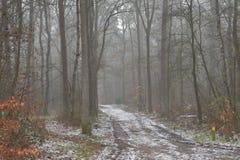 Śnieżna ścieżka w lesie obrazy stock