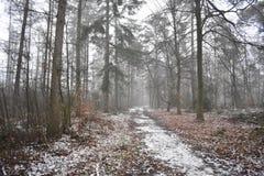 Śnieżna ścieżka w lesie zdjęcia stock