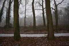 Śnieżna ścieżka w lesie zdjęcie royalty free