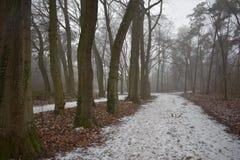 Śnieżna ścieżka w lesie obraz stock