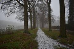 Śnieżna ścieżka w lesie obrazy royalty free
