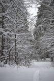Śnieżna ścieżka w lesie Zdjęcia Royalty Free