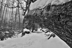 Śnieżna ścieżka z spadać drzewny patrzeć jak most w Peklo dolinie w czeskim Machuv kraju regionie Zdjęcia Royalty Free