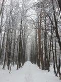 Śnieżna aleja Zdjęcia Royalty Free