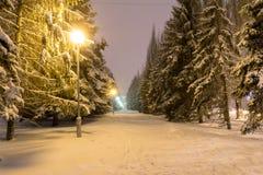 Śnieżna aleja Zdjęcie Stock