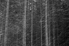 Śnieżna burza Obraz Stock