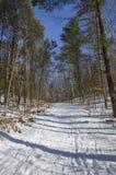 Śnieżna droga w Awenda parku zdjęcie stock