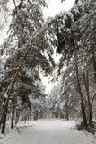 Śnieżna droga w zima lesie Zdjęcia Stock