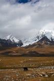 Śnieżna góra Obraz Stock