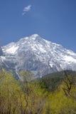 Śnieżna góra i drzewa Obrazy Royalty Free