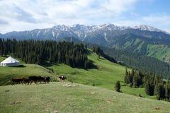 Śnieżna góra i obszar trawiasty Obrazy Royalty Free