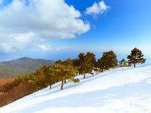 Śnieżna góra z sosnami na słonecznym dniu na Petri, Crimea, Rosja zdjęcie royalty free