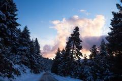 Śnieżna górzysta droga z jedlinowymi drzewami na stronie podczas zmierzchu zdjęcia royalty free