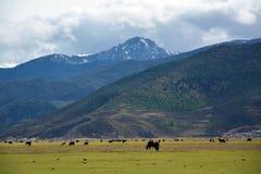 śnieżna halna chmurna dolina Zdjęcia Royalty Free