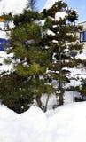 Śnieżna i drzewna zima w Sapporo Zdjęcia Royalty Free