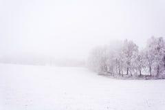 Śnieżna i odmrożona aleja wzdłuż dróg Obraz Royalty Free