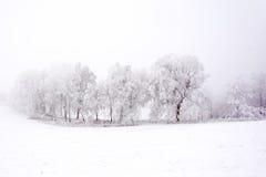 Śnieżna i odmrożona aleja wzdłuż dróg Obraz Stock