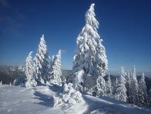 Śnieżna jodła Drzewo spada uśpiony Zdjęcie Royalty Free