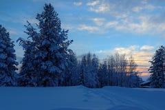 Śnieżna jodła na tle zmierzch, wioska Malye Karely, Arkhangelsk region, Rosja obraz stock