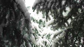 Śnieżna jodła, opad śniegu, bożego narodzenia spojrzenie zbiory