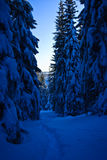 śnieżna lasowa ścieżka Fotografia Stock