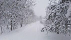 śnieżna lasowa droga zbiory