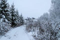 Śnieżna lasowa droga zdjęcie stock