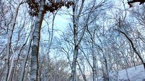 Śnieżna Lasowa sceneria Illinois zdjęcie wideo