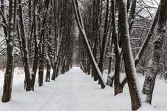 Śnieżna lipowa aleja na mroźnym dniu zdjęcia stock