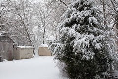 Śnieżna miecielica Zdjęcia Stock