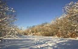 śnieżna pogodna zima Zdjęcia Royalty Free