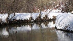 Śnieżna rzeki krzywa w parku zbiory wideo